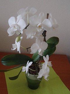 FOTKA - moja nová orchidea