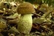 houbový ráj