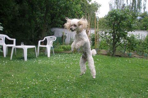 FOTKA - Létající pes