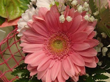 FOTKA - gerberka z kytice