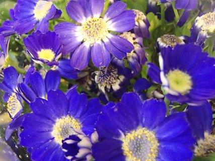FOTKA - modrá záplava kvetov