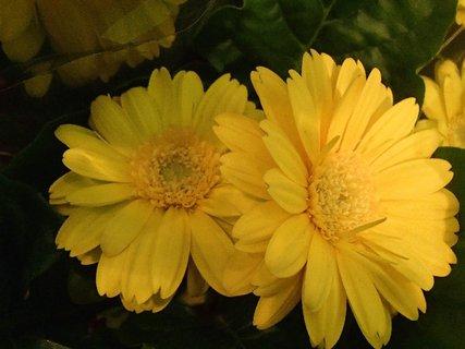 FOTKA - žlté slniečka