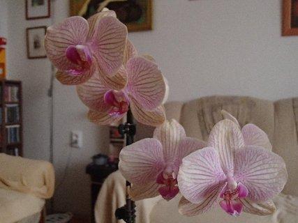 FOTKA - štyri kvietky orchidei