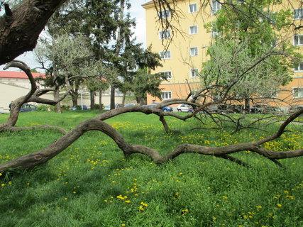 FOTKA - zvláštní strom 3