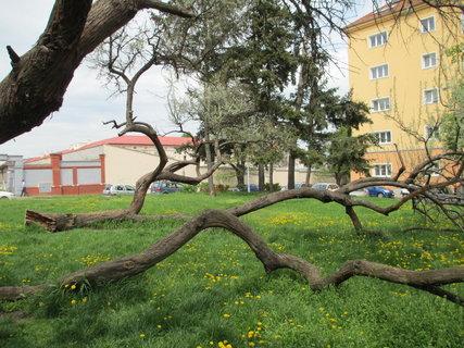FOTKA - zvláštní strom 2