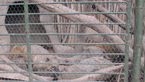 FOTKA - klece se zvířátky 3