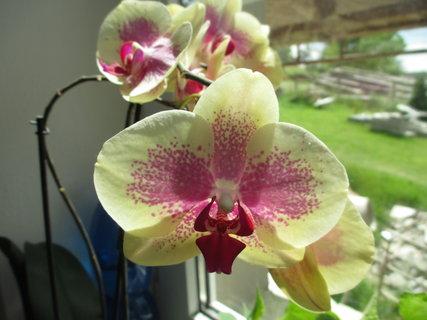 FOTKA - kvetoucí kytky 2