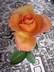Růže2