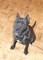 Stafordšírský terier