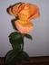 Růže4