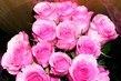 Růžičky3