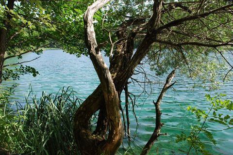 FOTKA - strom plitvice