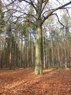 FOTKA - podzimní toulání, parádní strom