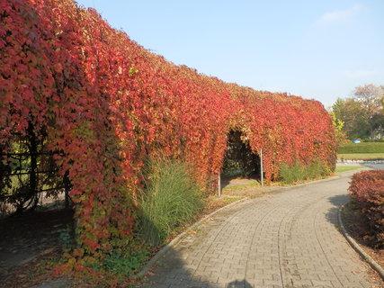 FOTKA - barevným listím obrostlá ocelová kolonáda na nám. Míru v Teplicích