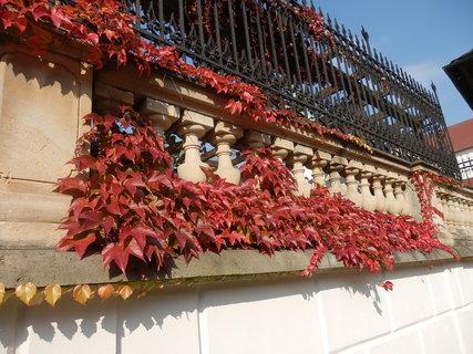 FOTKA - podzim....