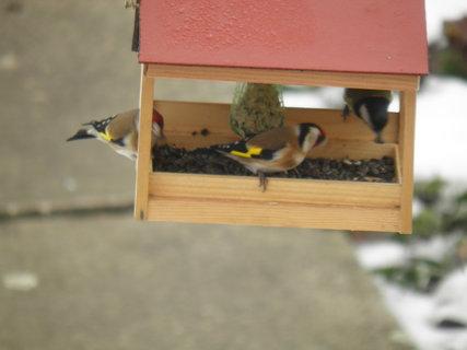FOTKA - Ptáci v zimě 6