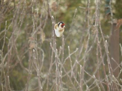 FOTKA - Ptáci v zimě 7