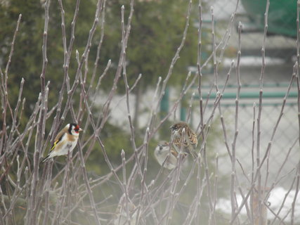 FOTKA - Ptáci v zimě 9