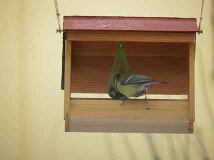 FOTKA - Ptáci v zimě 15