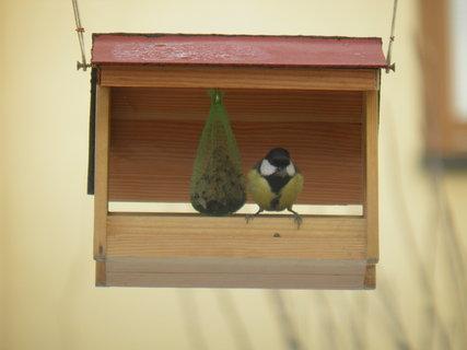 FOTKA - Ptáci v zimě 16