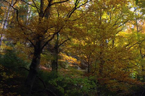 FOTKA - Listí ze zlata