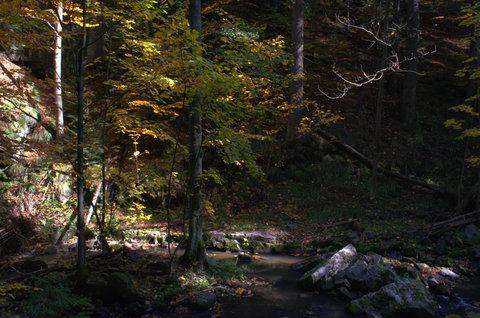 FOTKA - Podzimní zákoutí u řeky Doubravy