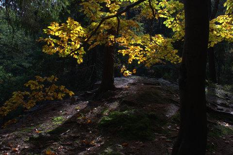 FOTKA - Prozářený les