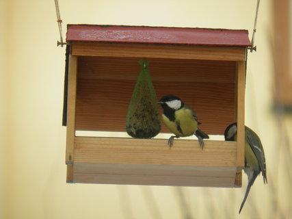 FOTKA - Ptáci v zimě 21