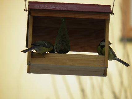 FOTKA - Ptáci v zimě 25
