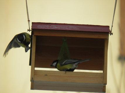 FOTKA - Ptáci v zimě 26