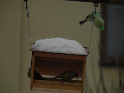 FOTKA - Ptáci v zimě 38