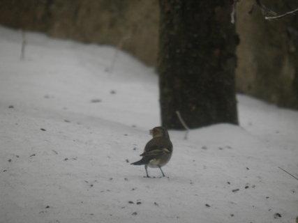 FOTKA - Ptáci v zimě 46