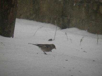 FOTKA - Ptáci v zimě 48