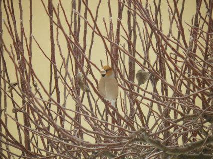FOTKA - Ptáci v zimě 53
