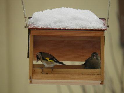 FOTKA - Ptáci v zimě 65