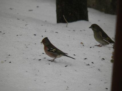 FOTKA - Ptáci v zimě 70