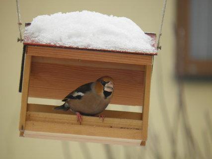 FOTKA - Ptáci v zimě 79