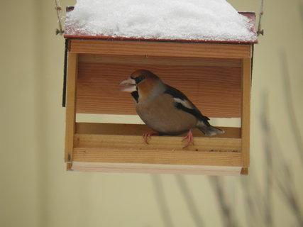FOTKA - Ptáci v zimě 82