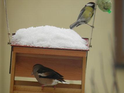 FOTKA - Ptáci v zimě 87