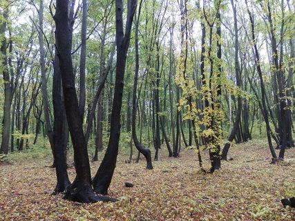 FOTKA - Řetenický lesopark v Teplicích
