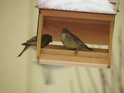 FOTKA - Ptáci v zimě 101