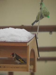 FOTKA - Ptáci v zimě 118