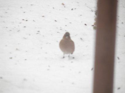 FOTKA - Ptáci v zimě 120