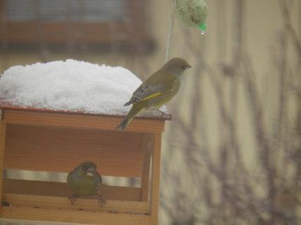 FOTKA - Ptáci v zimě 122