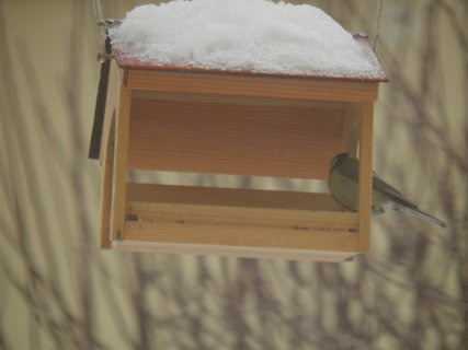 FOTKA - Ptáci v zimě 123