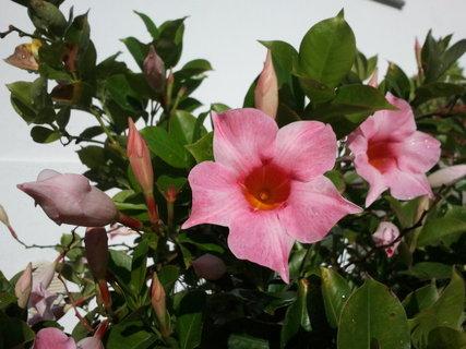 FOTKA - kvetou listopadu navzdory
