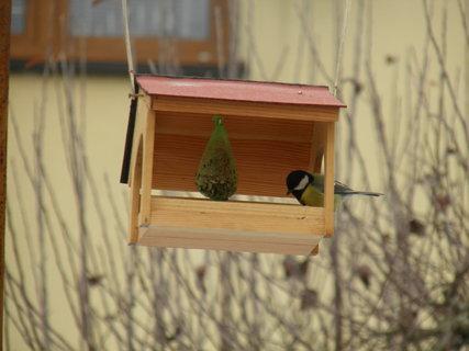 FOTKA - Ptáci v zimě 146