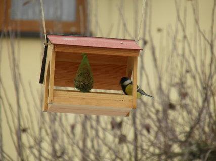 FOTKA - Ptáci v zimě 151