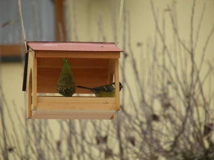FOTKA - Ptáci v zimě 152