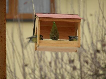 FOTKA - Ptáci v zimě 160